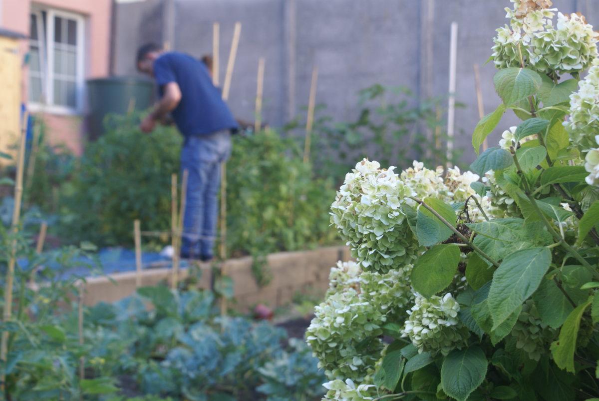 Karmacadabra sur LFM | Les jardins partagés (lien vers l'émission LFM)